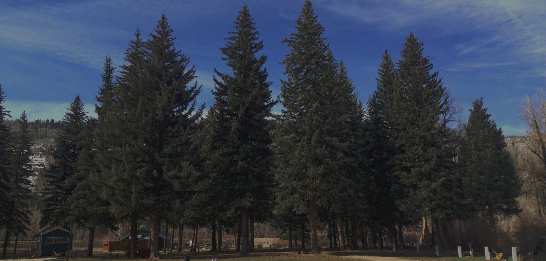 pines hiding the 420 friendly stoner rv resort